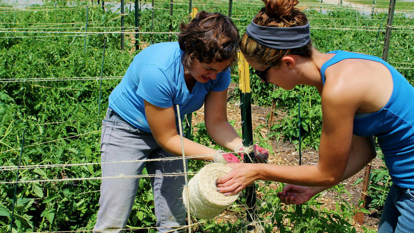 People working together in a vegetable garden