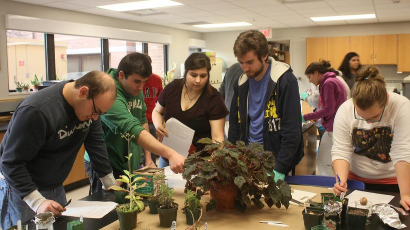 Group of students working with plants