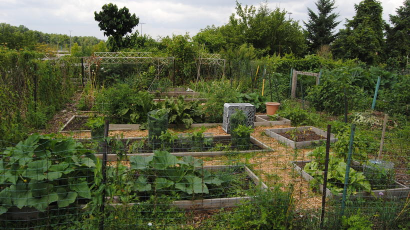 A garden plot in the Community Organic Garden