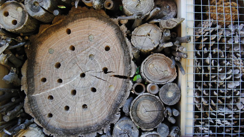 Nesting materials of the Go Blue! Insect Hotel