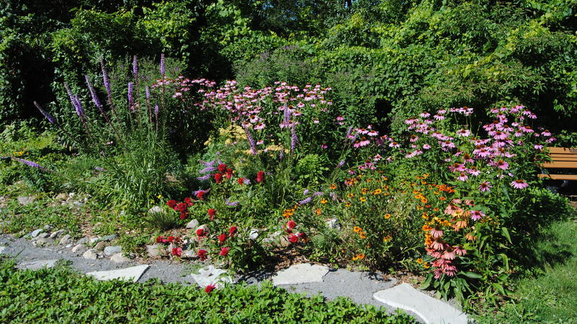 Flower bed in Pollinator Garden
