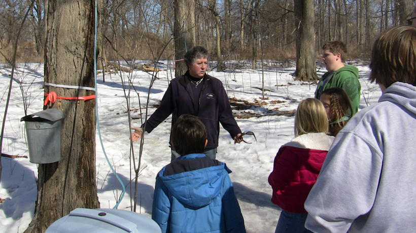 Maple Syrup Science Program in the Environmental Study Area