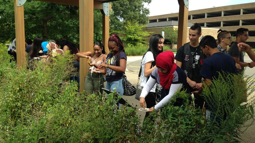 New UM-Dearborn students gather native plant species to spread in the Environmental Study Area