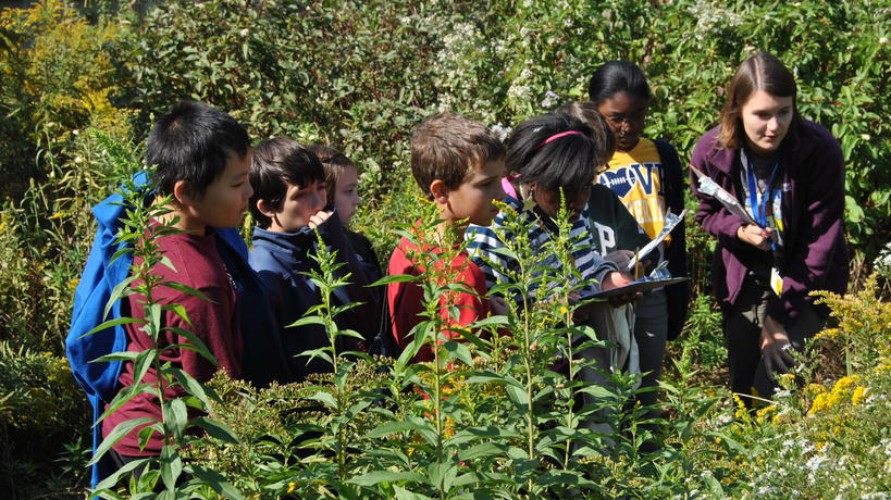 Plant Identification Program
