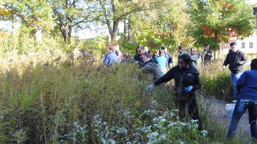 Student volunteers collect native plant seeds to sow along banks of the Rouge River