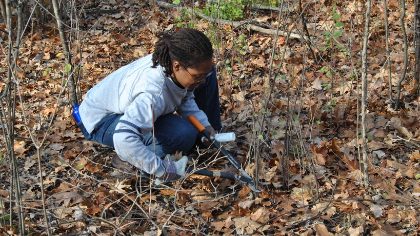 Student volunteer cutting invasive shrubs in the Environmental Study Area